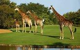 Giraffen auf dem Grün