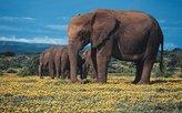 Elefanten im Addo Elephant-Nationalpark