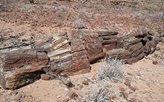 Versteinerte Holzstämme